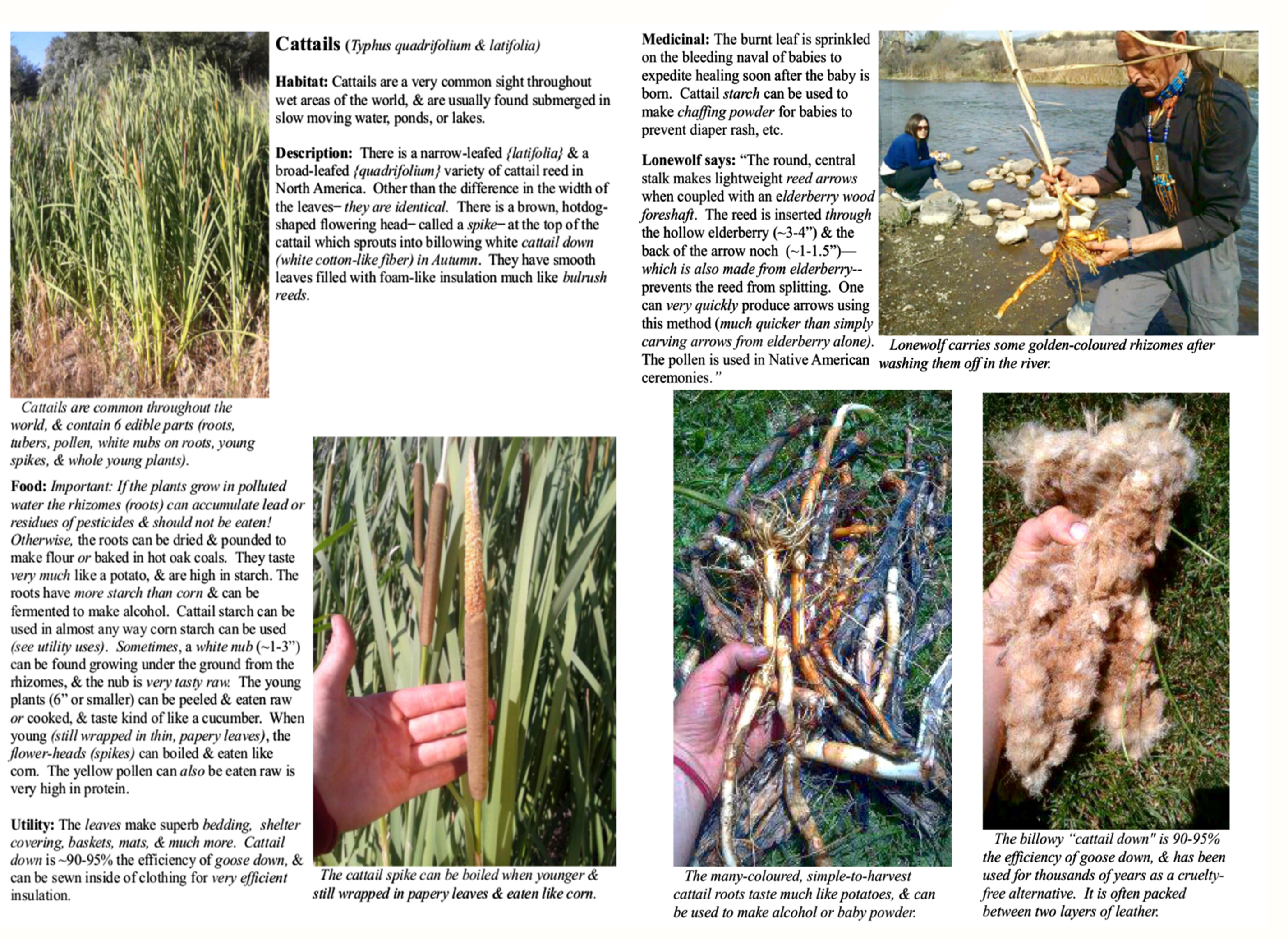 Cattail Pages